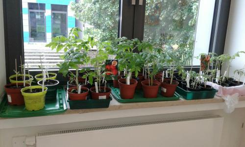 Pflanz- und Gartenprojekt